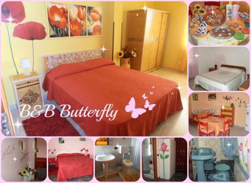 B & B Butterfly